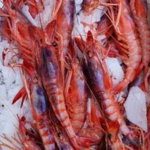 mariscos-frescos-de-huelva-alistado-gamba-roja
