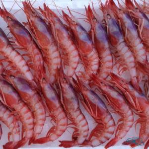 gamba-roja-de-huelva-marisco-online