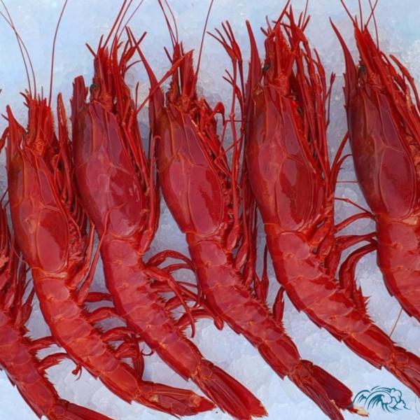 Tamaño Carabinero Rojo 5/7 piezas kilo