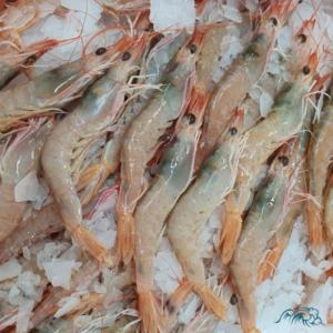 Tamaño Gamba Blanca de Huelva 50/60 Piezas por kilo