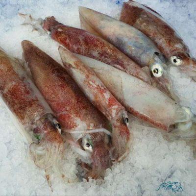 calamares-de-potera-pescaderia-online