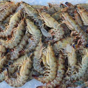 langostinos de Sanlúcar de Barrameda