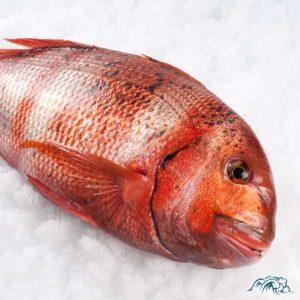 urta de Conil-pescado fresco